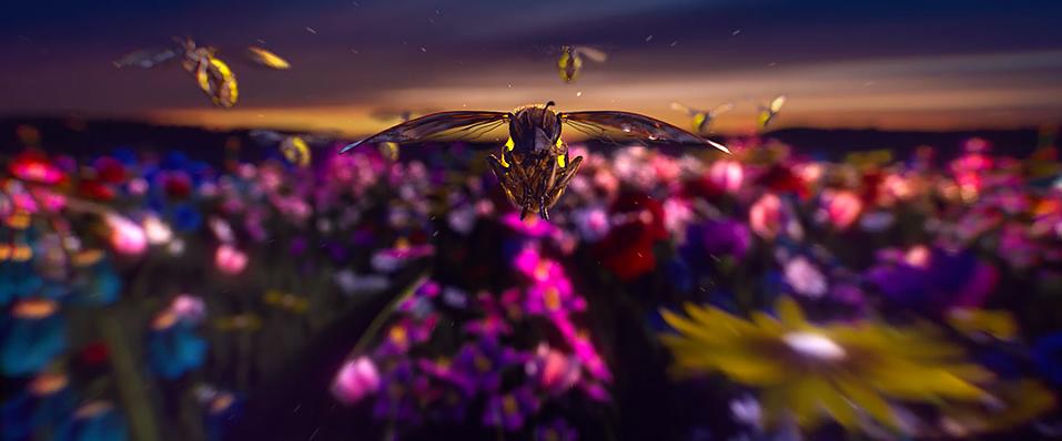 netcomm-bees-half-1