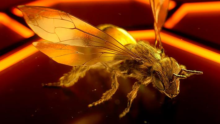 netcomm-bees-work